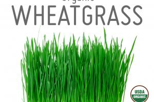 ORGANIC WHEAT GRASS WHOLE FOOD POWDER