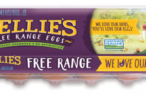 MEDIUM GRADE A FREE RANGE EGGS