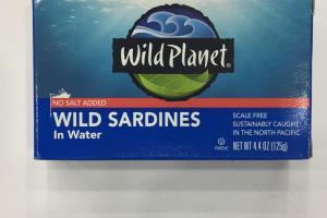 Wild Sardines In Water