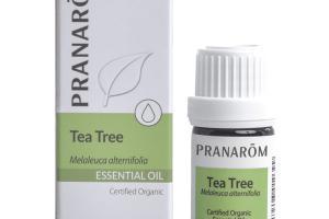 ESSENTIAL OIL, TEA TREE